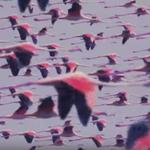 Deftones au lansat piesa 'Prayers/Triangles'